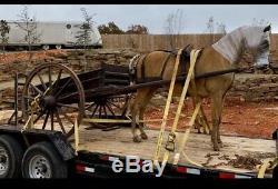 General Sheridans Civil War Orginal taxidermy horse & Wagon. 1860s Museum